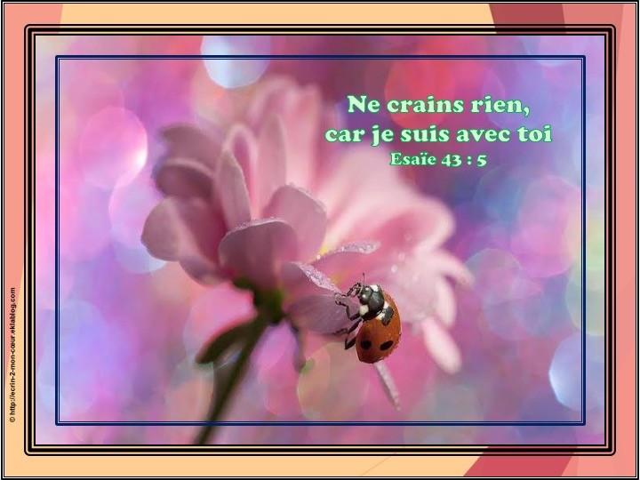 Esaïe 43 : 5